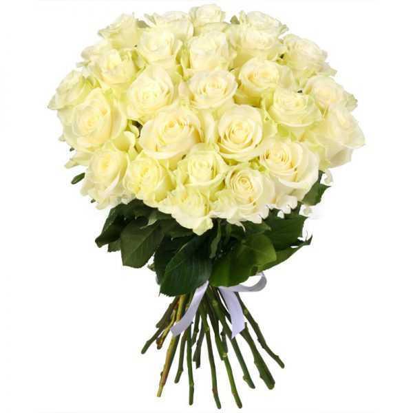 25 белых премиум роз