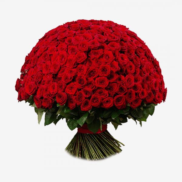 Букет из 301 розы